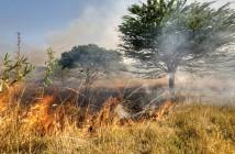 Fire Fule Reduction