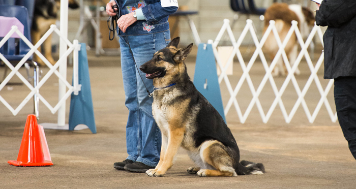 Mt Bachelor Kennel Club Dog Show