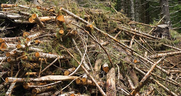 forest-biomass-courtesy-osu