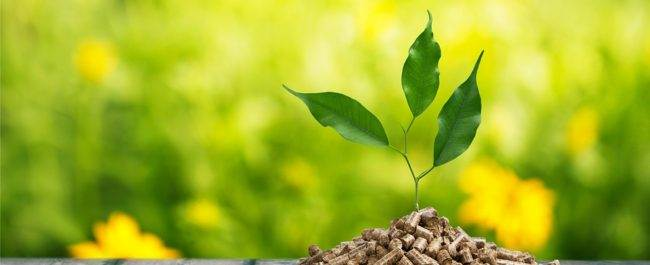 bigstock-biomass-125585642-650x265