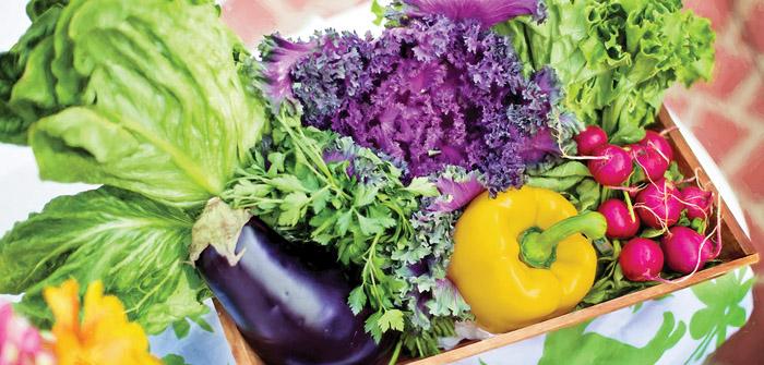 Food4AllDisrupts & Advances the Local Food Movement