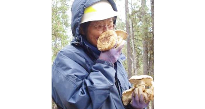 matsutake-mushrooms