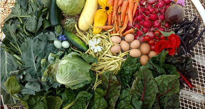 hdffa-veggies