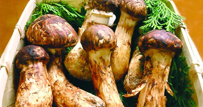 matsutake-mushroom