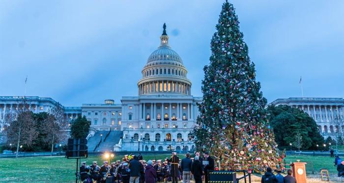 us-capitol-tree