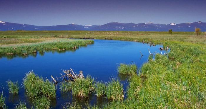 oregon-river-marsh