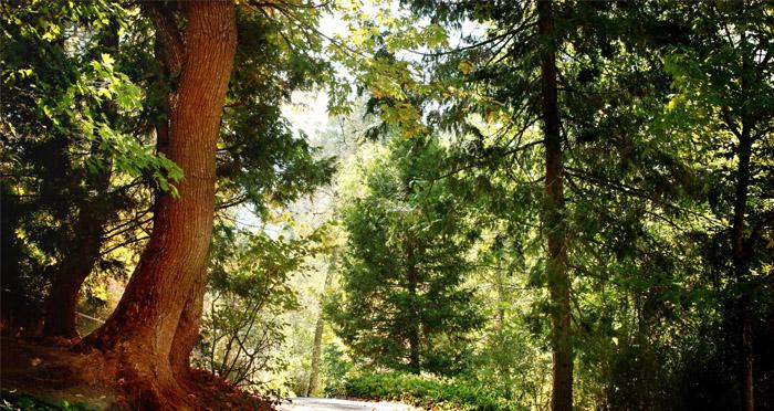 ochoco-national-forest